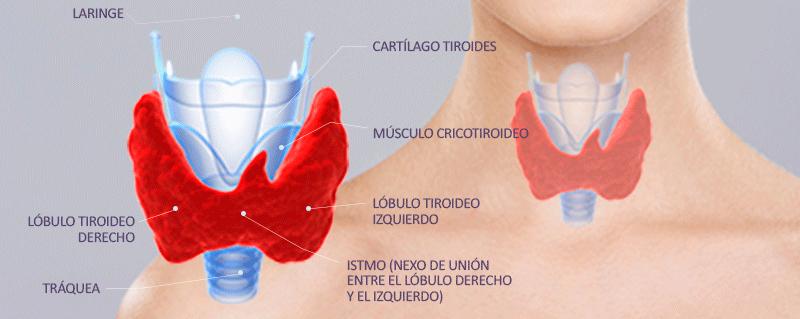 nodulos-tiroides-img-01