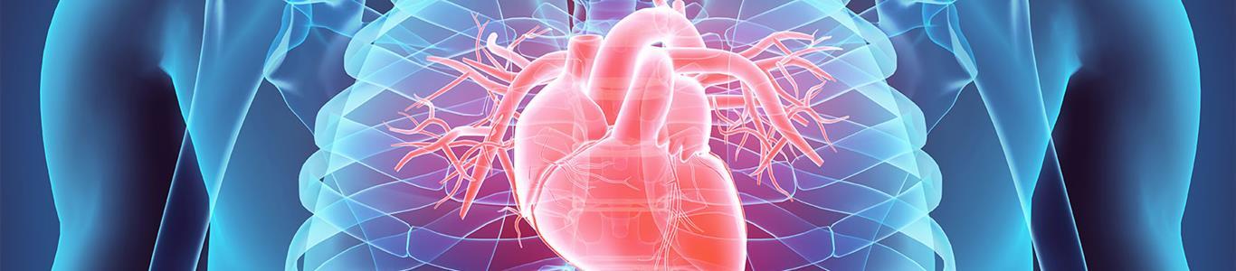 Líder en implante de válvulas cardiacas de última generación