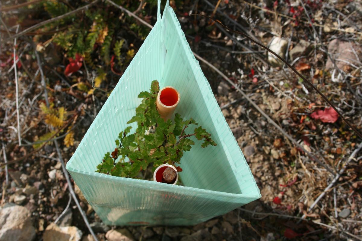maternidad-planta-tu-arbol-06